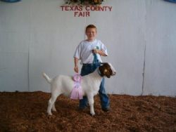 Hill Country Farm with their Res Ch Wether Out of  A Bear Creek Buck (18 Wethers were in the class)