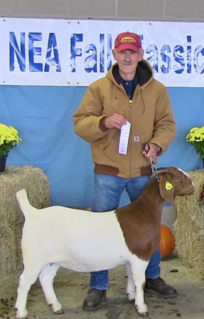 Bear Creek BC D766 Sheeza Dream out of Steam Roller placed 3rd at 1st and 3rd show.