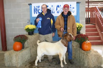 Bear Creek BC D817 Argo Placed Rsv O/A Grand 1st Show O/A Grand 2nd Show Junior Rsv 3rd Show