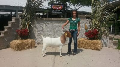 Sydney with Bear Creek BC D824 Melissa, Overall Grand Champion Doe, Tall Corn ABGA Open Show #2