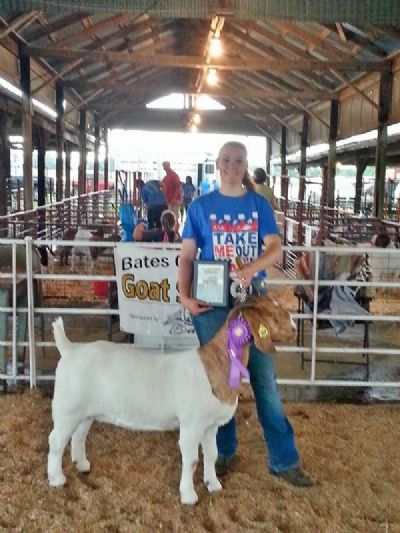 Bear Creek BC D869 Allison O/A GC at Cass, Pettis Henry and Bates County Fair and FFA District.2016