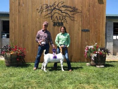 Wether sired by BC F989 won the 1st Annual Bred and Fed Competition at Park County Fair, WY