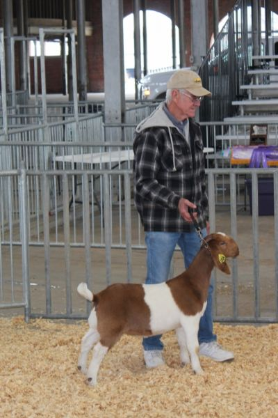 Bear Creek BC G1034 Dundees Ms Doubtfire First Show 4/21/2018.  Sedalia, MO